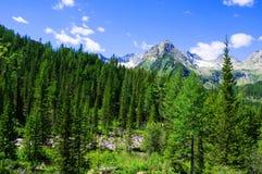 Foresta attillata sul prato del pendio di collina nell'alta cresta della montagna di Tatras Immagini Stock Libere da Diritti