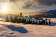 Foresta attillata sul prato nevoso in alte montagne al tramonto Fotografie Stock