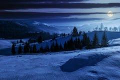 Foresta attillata sul prato nevoso in alte montagne alla notte Fotografia Stock Libera da Diritti