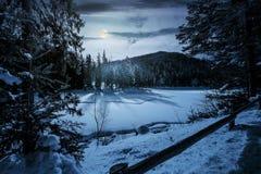Foresta attillata sulla notte di inverno alla luce di luna piena Fotografia Stock