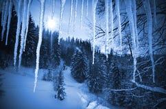 Foresta attraverso i ghiaccioli Immagini Stock Libere da Diritti