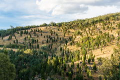 Foresta australiana di entroterra con gli alberi di eucalyptus fotografie stock libere da diritti