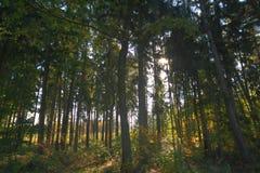 Foresta autunnale immagini stock libere da diritti