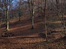 Foresta autunnale 2 Fotografia Stock