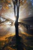 Foresta autunnale con i raggi del sole Fotografie Stock