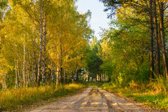 Foresta autunnale e la strada fra gli alberi fotografie stock