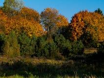 Foresta autunnale nel giorno soleggiato, Polonia immagine stock libera da diritti