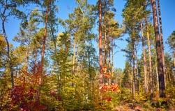 Foresta autunnale variopinta alla luce calda del sole fotografie stock