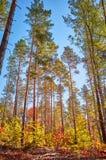 Foresta autunnale variopinta alla luce calda del sole fotografia stock libera da diritti