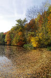 Foresta in autunno immagini stock libere da diritti