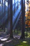 Foresta in autunno Fotografia Stock Libera da Diritti