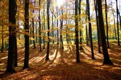 Foresta in autunno fotografia stock