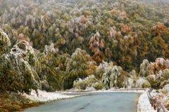 Foresta in autunno Immagine Stock