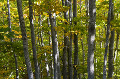 Foresta in autunno Immagini Stock