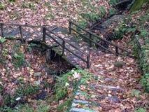 Foresta in autunno immagine stock libera da diritti