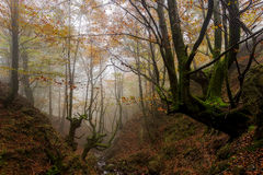 Foresta in autunno Fotografie Stock