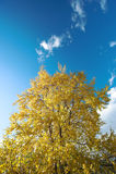 Foresta in autunno in anticipo fotografia stock libera da diritti