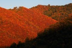 Foresta in autunno, Polonia Fotografia Stock