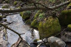Foresta bagnata degli alberi delle rocce di verde muscoso di Forest Dense Green Nature Environment all'aperto immagine stock libera da diritti