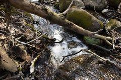 Foresta bagnata degli alberi delle rocce di verde muscoso di Forest Dense Green Nature Environment all'aperto immagini stock libere da diritti
