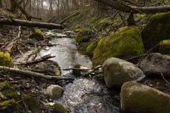 Foresta bagnata degli alberi delle rocce di verde muscoso di Forest Dense Green Nature Environment all'aperto fotografie stock