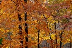 Foresta bagnata di autunno backlit dal sole di sera Fotografia Stock