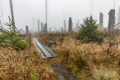 Foresta bavarese ed i marciapiedi di legno sopra la torba Foresta di autunno nel parco nazionale bavarese della foresta, Germania Fotografie Stock