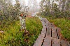 Foresta bavarese ed i marciapiedi di legno sopra la torba Foresta di autunno nel parco nazionale bavarese della foresta, Germania Immagine Stock Libera da Diritti