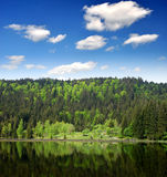 Foresta bavarese - Germania Fotografia Stock Libera da Diritti