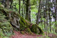 Foresta bavarese tedesca Fotografia Stock