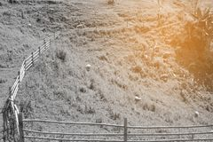 Foresta, bella montagna naturale bianca nero fotografie stock libere da diritti