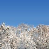 Foresta bianca di inverno con il lotto di neve Fotografia Stock