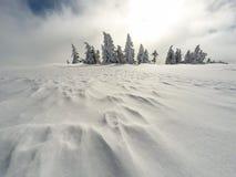 Foresta bianca di inverno con neve, fondo di Natale Immagine Stock