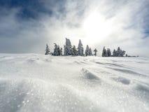 Foresta bianca di inverno con neve, fondo di Natale Immagini Stock