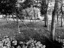 Foresta bianca e nera Fotografie Stock Libere da Diritti