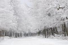 Foresta bianca nella stagione di inverno Fotografie Stock Libere da Diritti