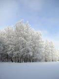 Foresta bianca sotto la SK blu Immagini Stock Libere da Diritti