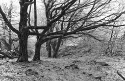 Foresta in bianco e nero Immagini Stock