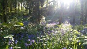 Foresta blu della campana fotografia stock
