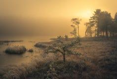 Foresta boreale congelata alla luce di alba immagine stock