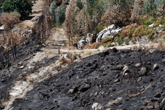 Foresta bruciata Immagine Stock Libera da Diritti