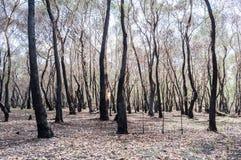Foresta bruciata dopo fuoco fotografie stock libere da diritti