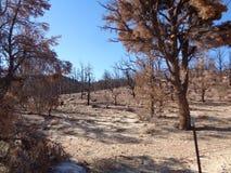 Foresta bruciata nelle montagne - conseguenze del ginepro di fuoco selvaggio 2 immagini stock