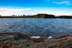 Foresta calma Fotografia Stock