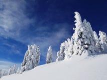 Foresta canadese innevata Fotografia Stock Libera da Diritti