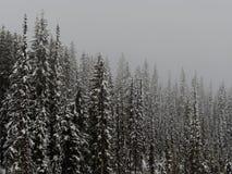 Foresta canadese innevata un giorno nebbioso Fotografia Stock Libera da Diritti