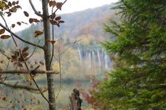 Foresta, cascata e fiume del parco nazionale di Plitvice Fotografia Stock