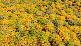 Foresta che di autunno molti alberi 3D renda Immagini Stock