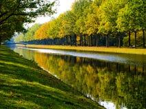 Foresta che riflette sul fiume Fotografie Stock Libere da Diritti