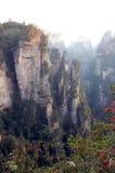Foresta Chian reserve9 fotografie stock libere da diritti